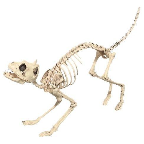 Halloween Sonic Realistic Skeleton Cat  Target Halloween in 2018