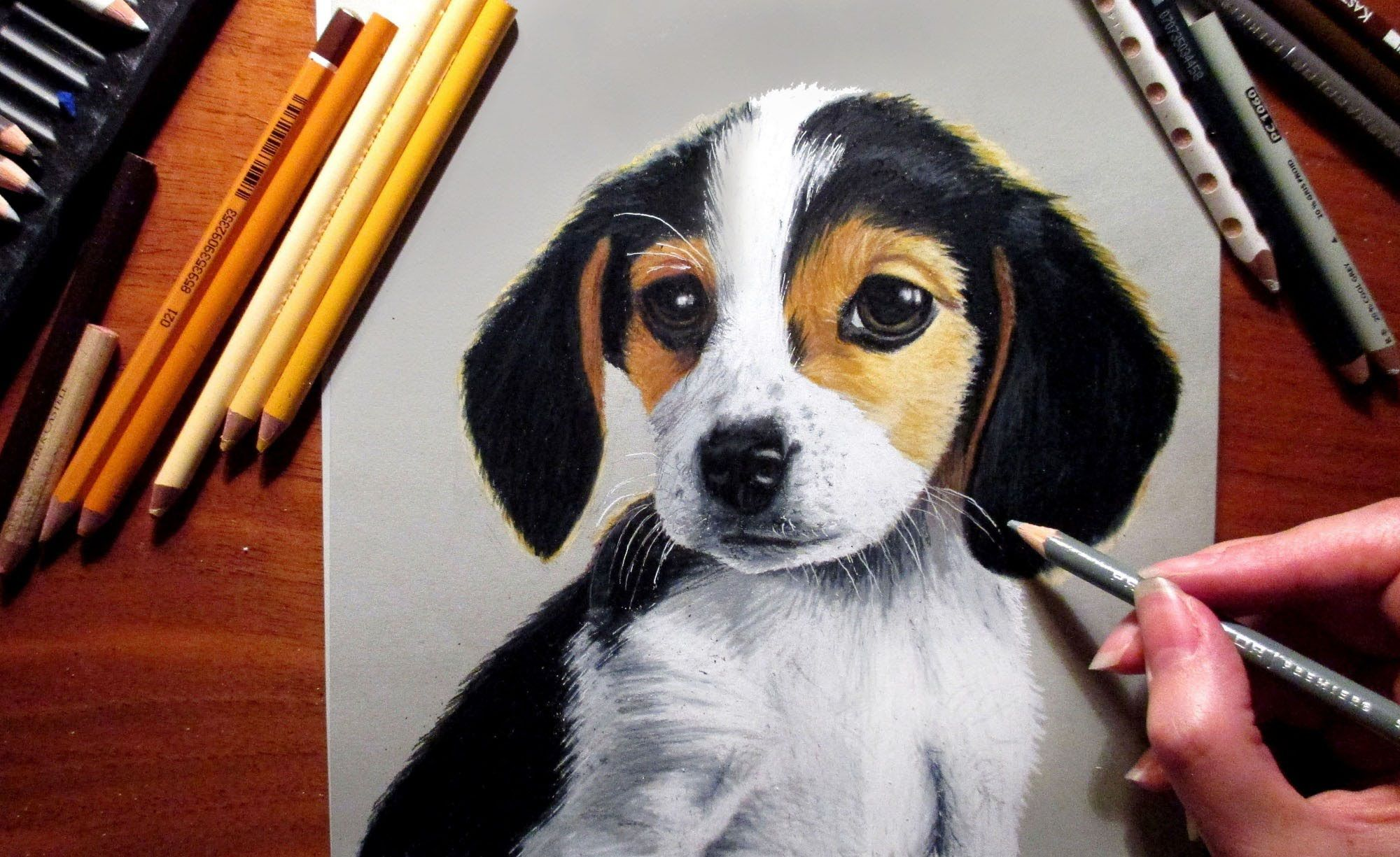 Speed Drawing Cute Puppy Beagle Jasmina Susak Beagle Art