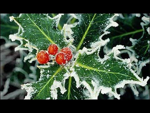 The Holly and the Ivy - David Hicken - Solo Piano - Carols of