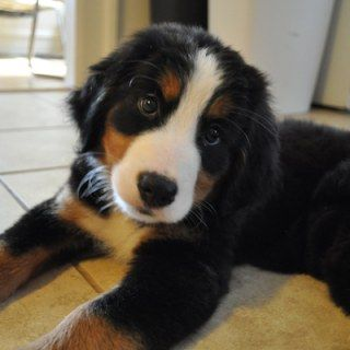 So Goldig Diese 15 Welpen Fotos Bringen Unser Herz Zum Schmelzen Welpen Niedliche Welpen Susseste Haustiere