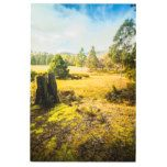 Bright and colourful forest landscape metal print  Bright and colourful forest landscape metal print  $284.90  by Jorgophotography  . More Designs http://bit.ly/2hyOutM #zazzle