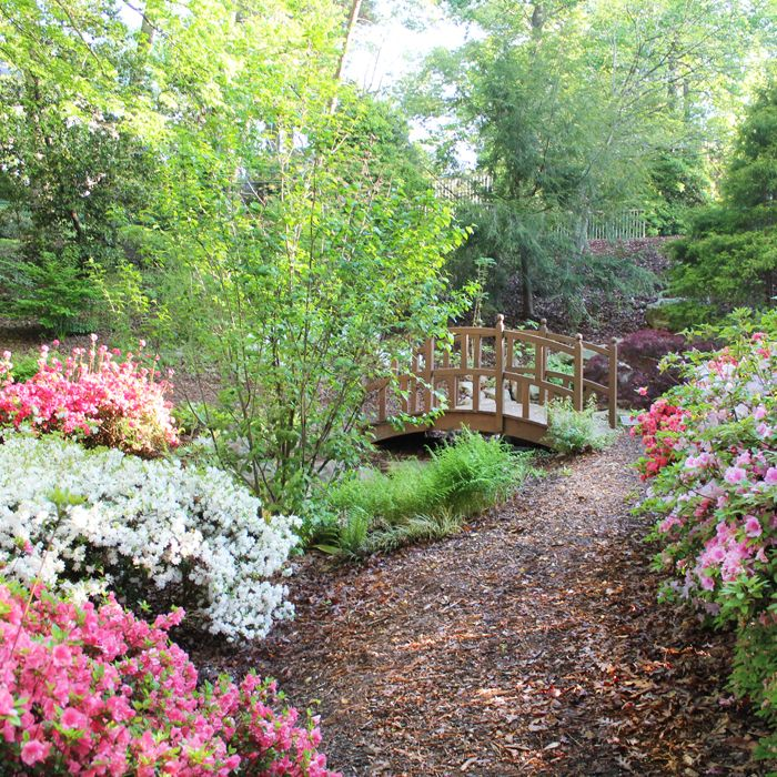 Delightful Azaleas Are In Bloom At The Atlanta History Center! Did You Know That The  AHC