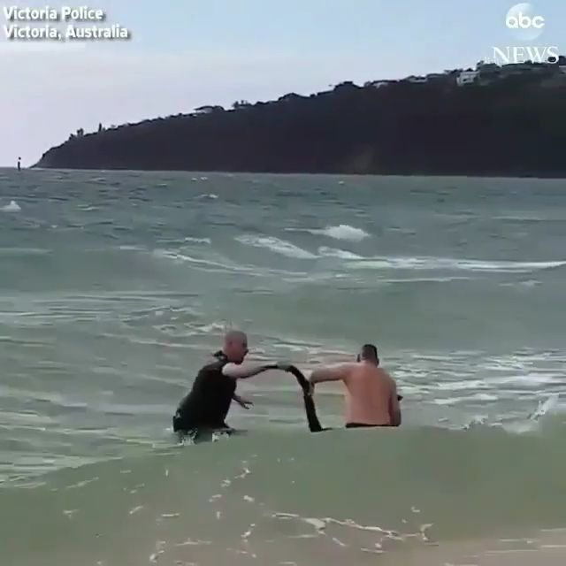 These people save the life of drowning kangaroos great job.. please follow Animals Board for more videos