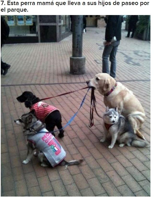 Conciencia Social 31 Fotos De Perros Locos Funny Dog Pictures Funny Animal Pictures Funny Cute
