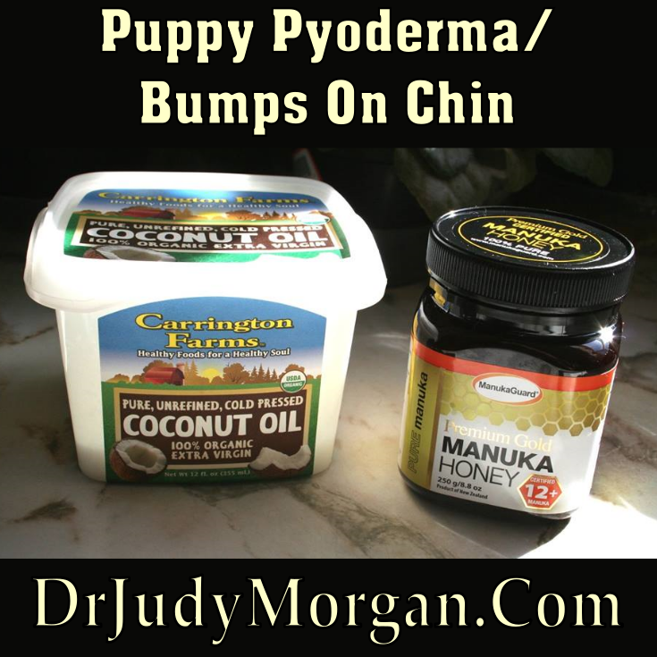 Puppy Pyoderma On Chin Dog treatment, Natural care, Dog