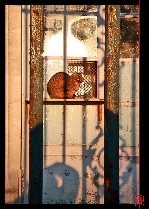 778 Chat réchauffe le soleil ! (via mamnic47) CATS IN WINDOWS - Windows Fences
