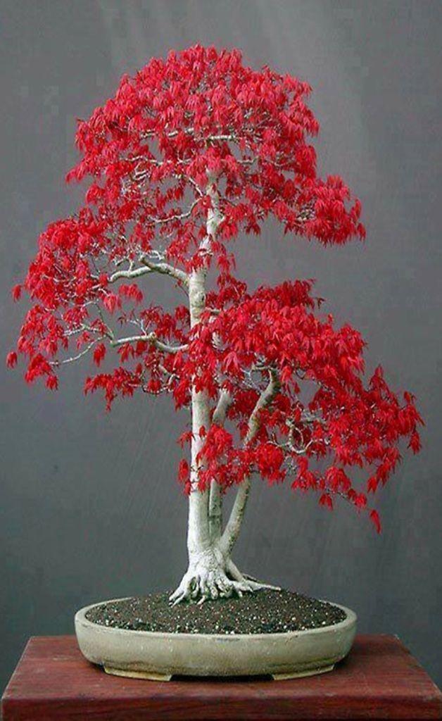 Resultado de imagen para incredible bonsais