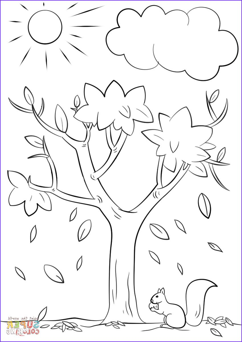Autumn Tree Coloring Page Tree Coloring Page Fall Coloring Pages Fall Coloring Sheets [ 1200 x 849 Pixel ]