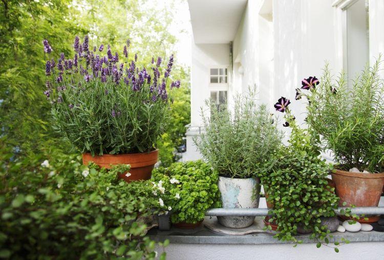 Mediterrane Gartengestaltung Lavendel Kuebel Pflanzen Gewuerze