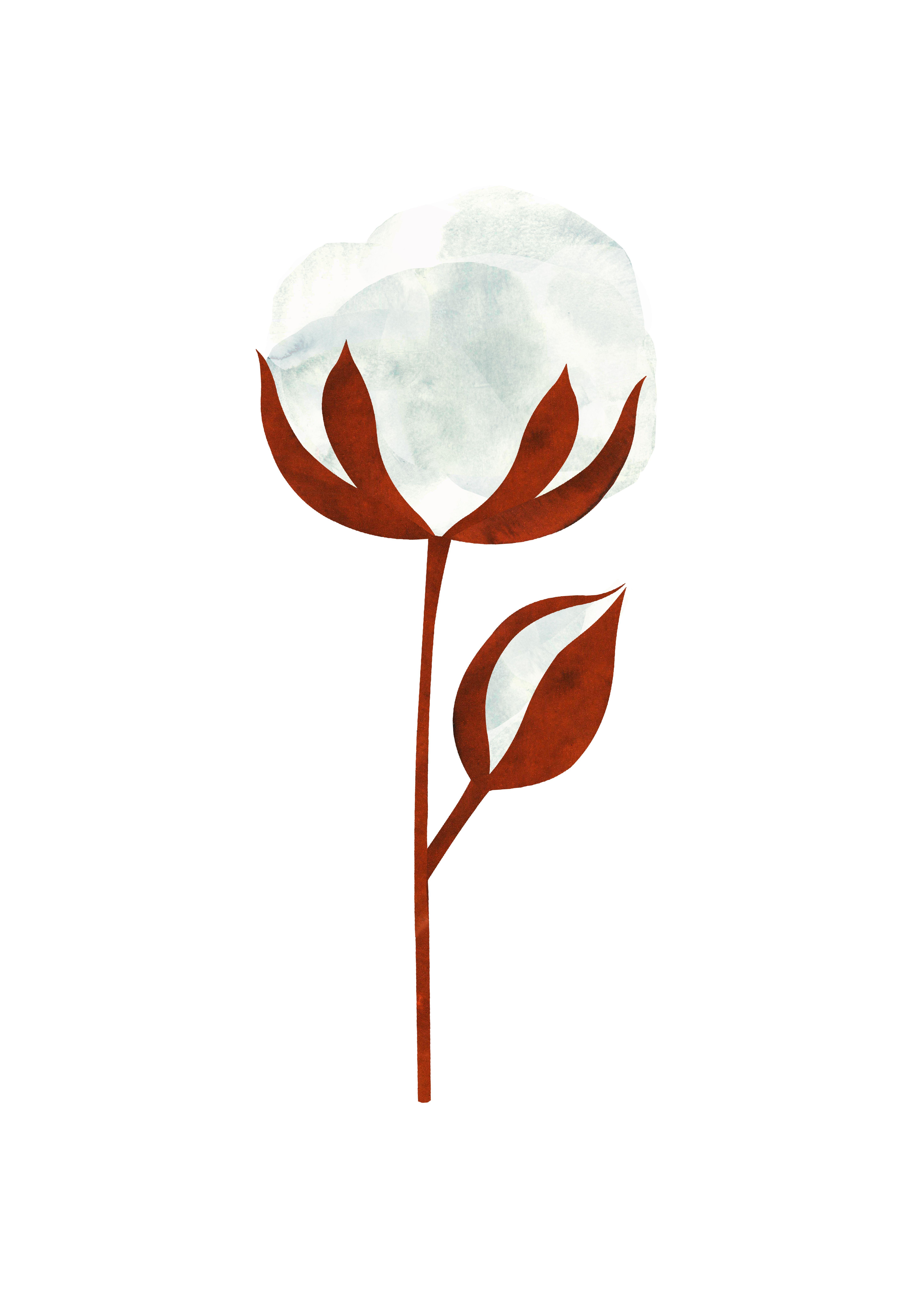 Cotton Flower Maria Leon Ilustracion De Flor Planta De Algodon Flor De Algodon