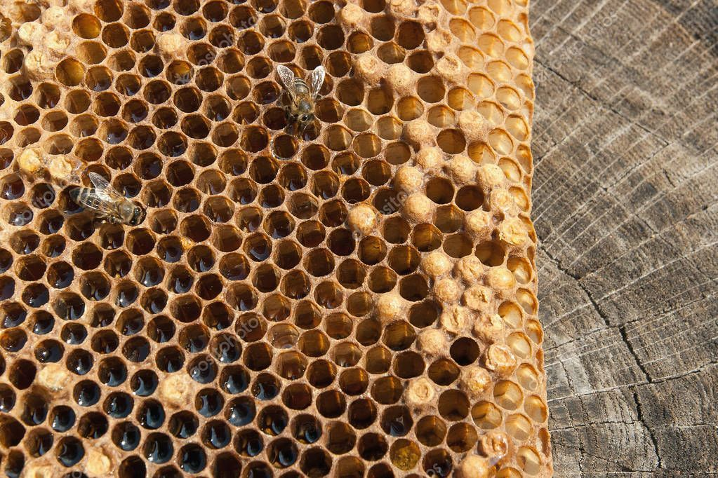 Close up view of the working bee on the honeycomb with sweet hon - Stock , #AFF, #working, #bee, #Close, #view #AD
