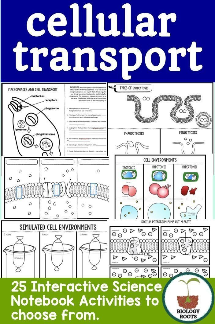 Diffusion and Osmosis Worksheet Answers Cell Transport