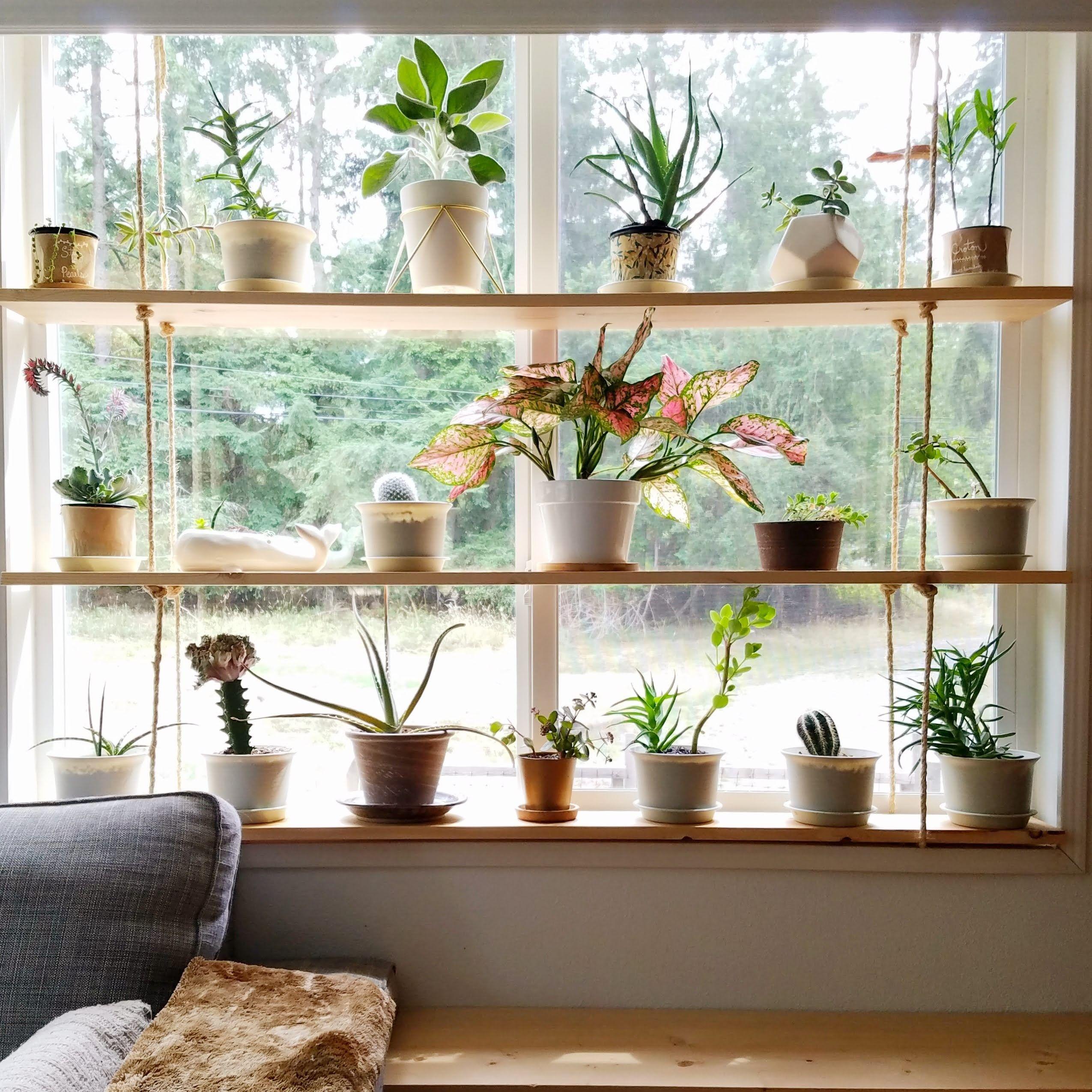 Window Plant Shelf Ideas and Inspiration  Hunker in 15