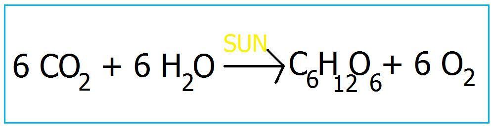 формула фотосинтеза у растений прически длинные
