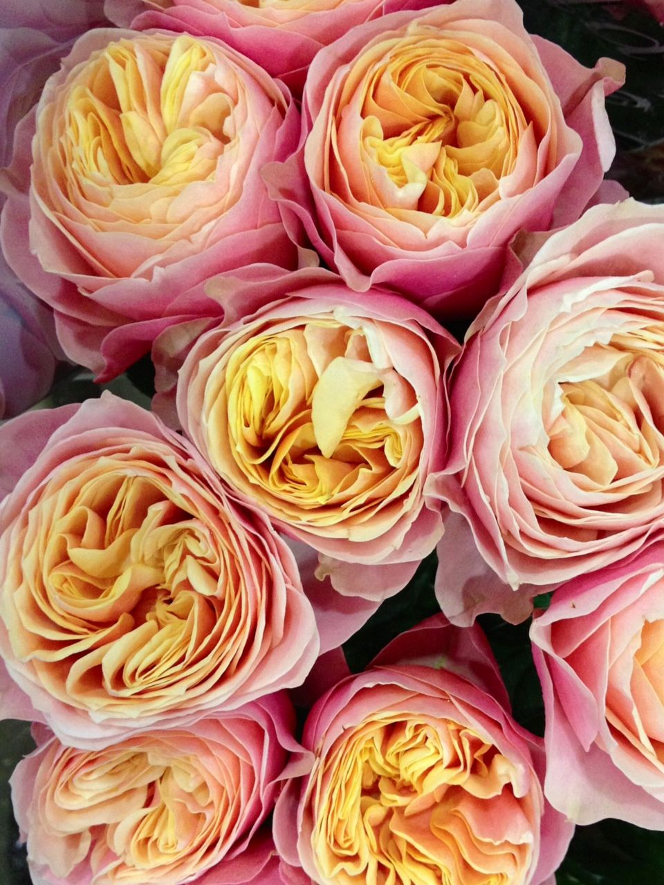Vuvuzela Roses Stunning English Roses Pinterest Bright