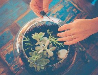 un terrarium... une belle idée cadeau handmade (avec conseils d'entretien) — planB par Morganours