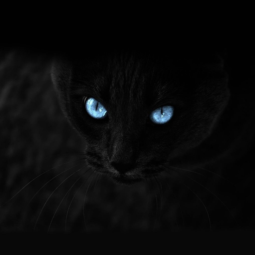 Blue Staring Cat Eye Dark IPad Wallpaper