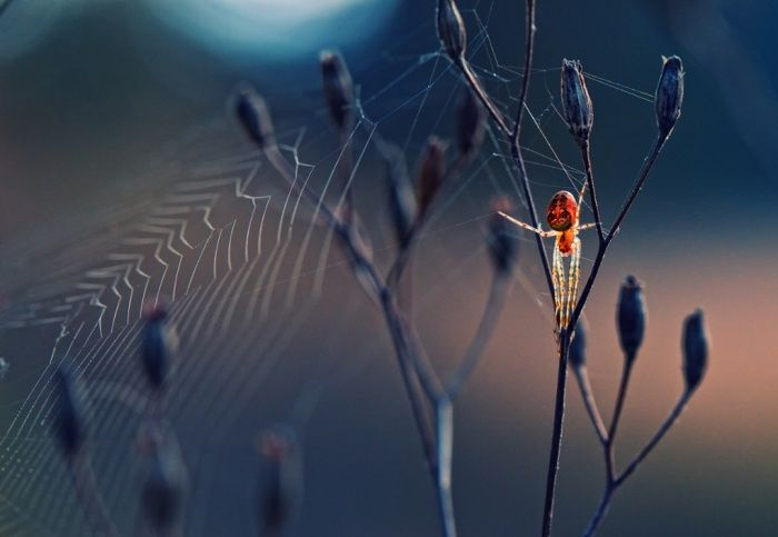 'Spider Like From Another World' by Krasimir Matarov, which has been shortlisted for the Society of Biology's Photography Award.