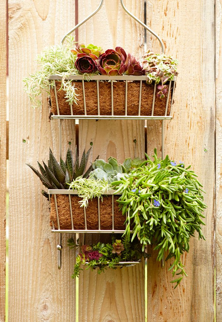Turn an old shower caddy into a hanging garden: http://www ...