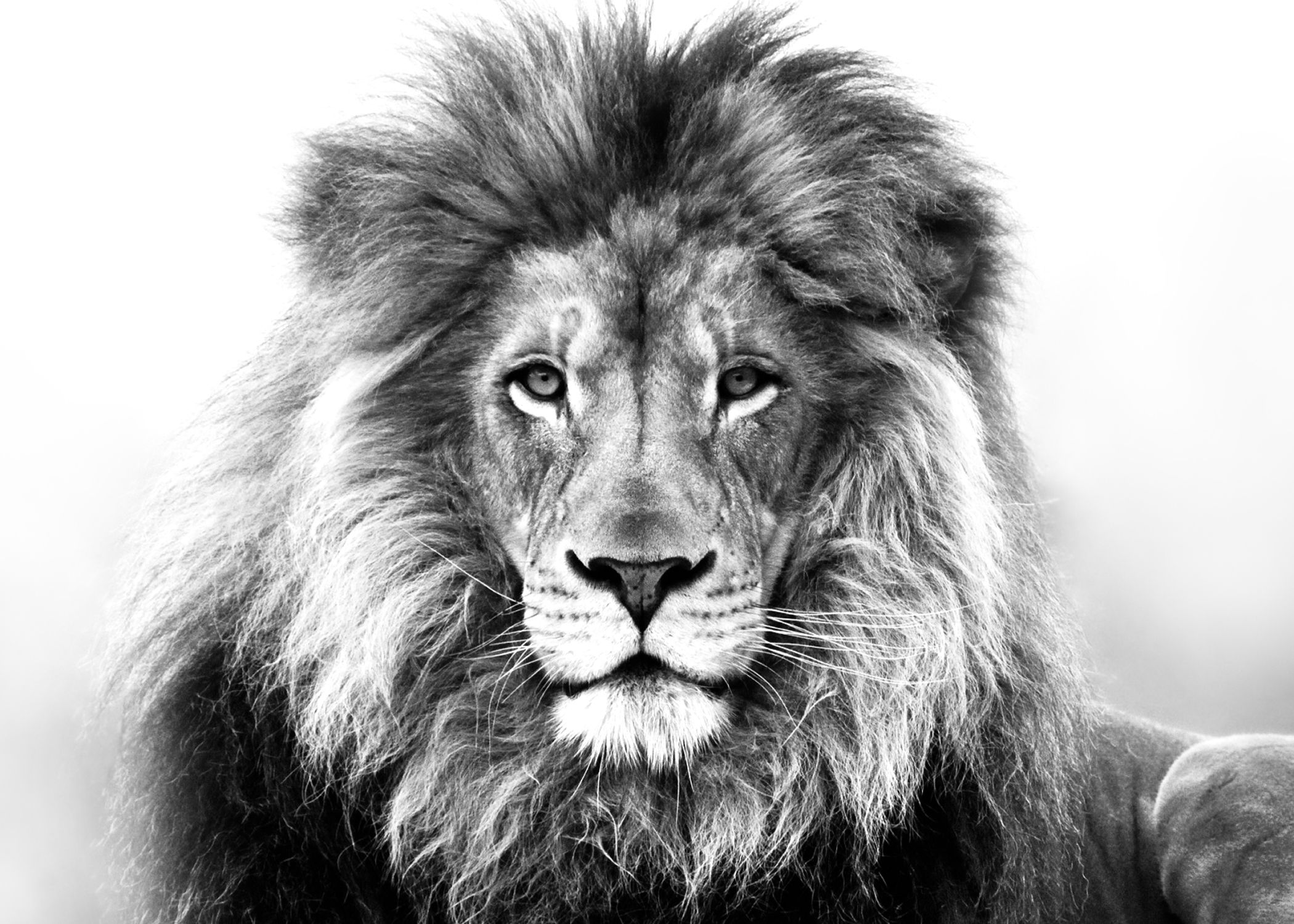 The Lion and The Accus...