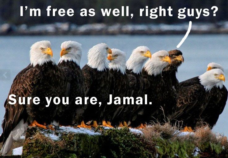 sure you are jamal sure..