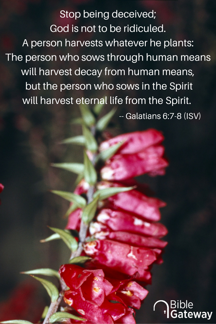 Stop being deceived; God is not to be ridiculed. A person harvests whatever he plants: The person who sows through human means will harvest decay from human means, but the person who sows in the Spirit will harvest eternal life from the Spirit. --Galatians 6:7-8 (ISV)