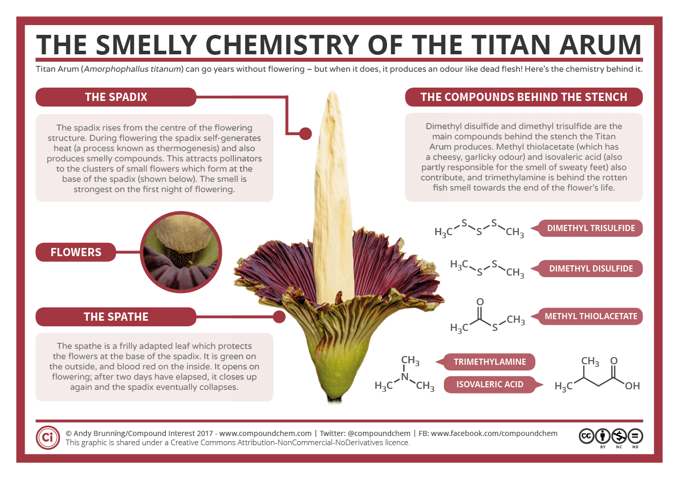A Plant Flowering Might Not Seem Like A Particularly Special Occasion But The Titan Arum Is No Ordinary Plant Titan Arum Chemistry Science Chemistry