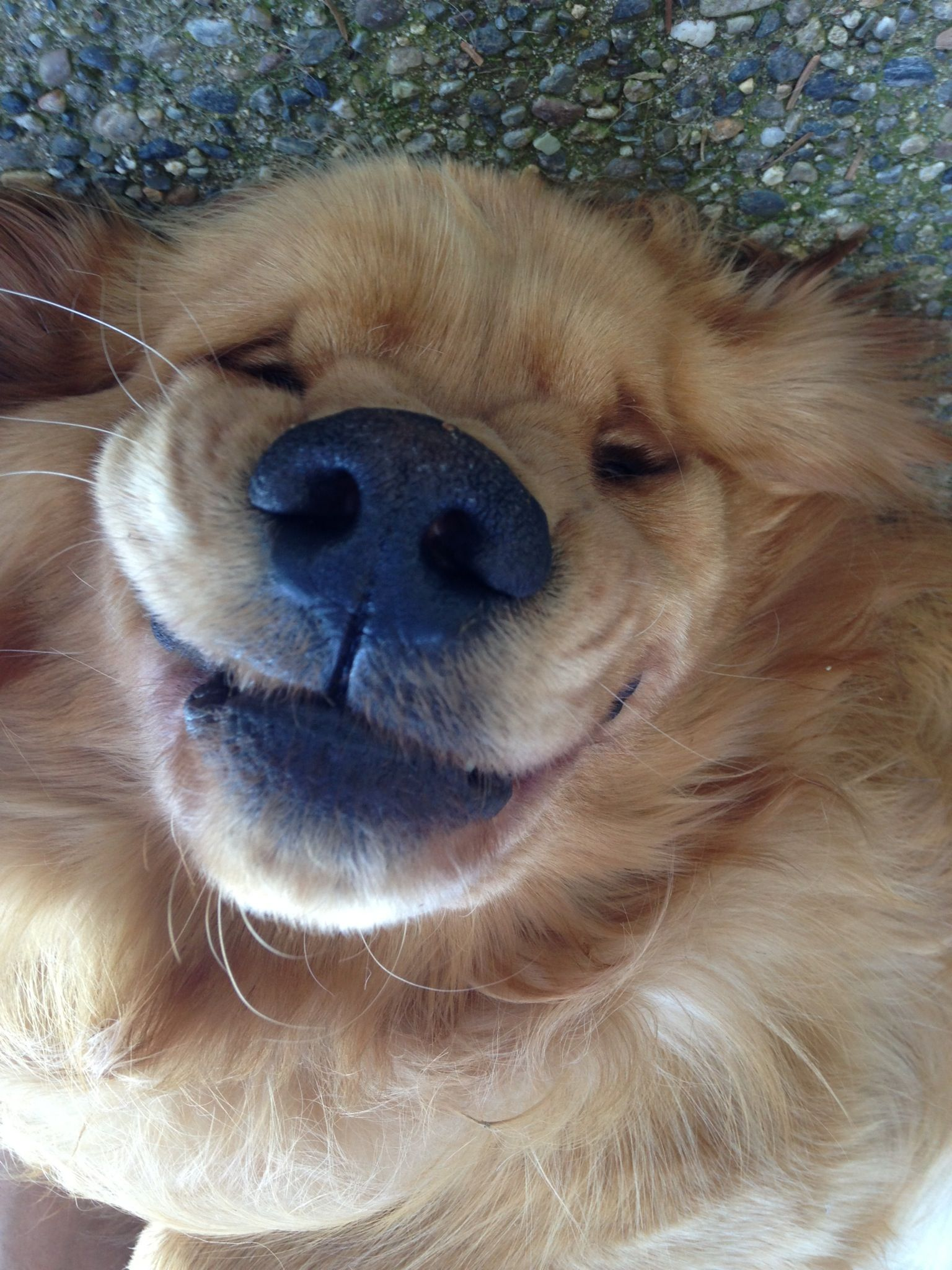 Smiling Dog Smiling Dogs Funny Dog Pictures Cute Animals Puppies