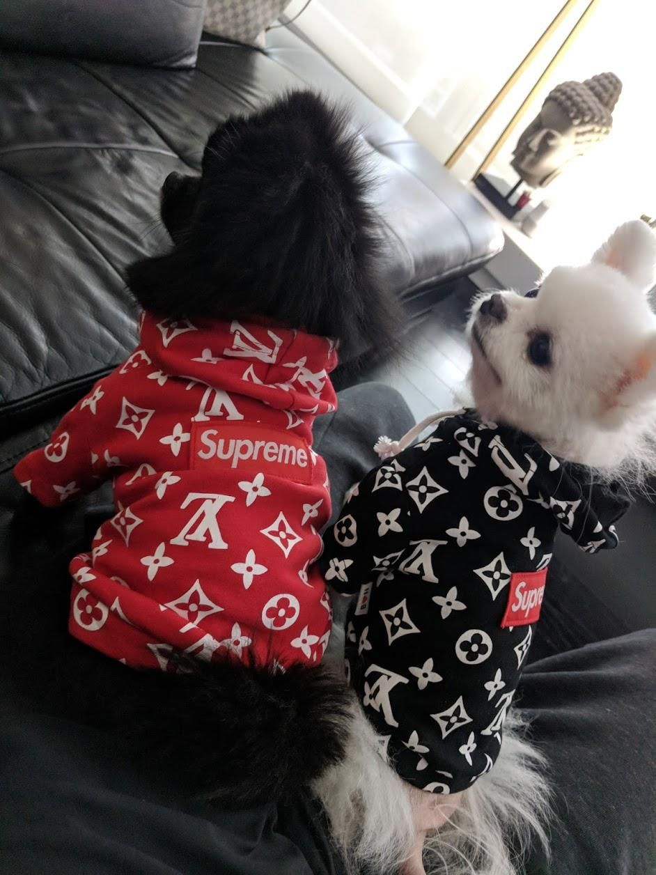 Designer Inspired Street Wear For Dogs Available Now At Https