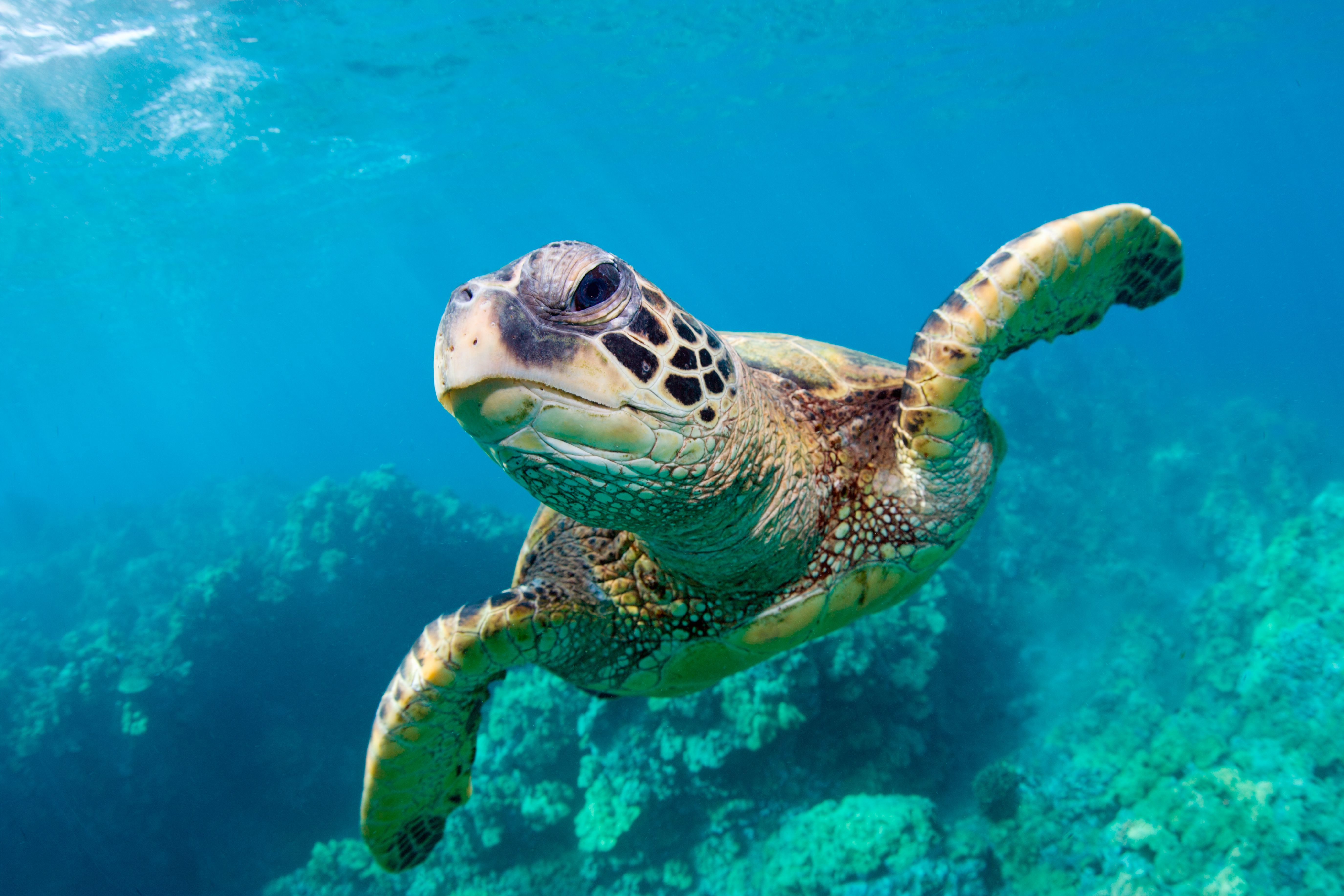 Learn About Sea Turtles With These Free Printable
