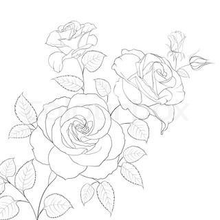 Abstract Rose Free Hand Drawing In A Graphic Style Points And Lines Can Be Used For Drawing Tattoo Vector Colourbo Roses Drawing Rose Outline Rose Drawing