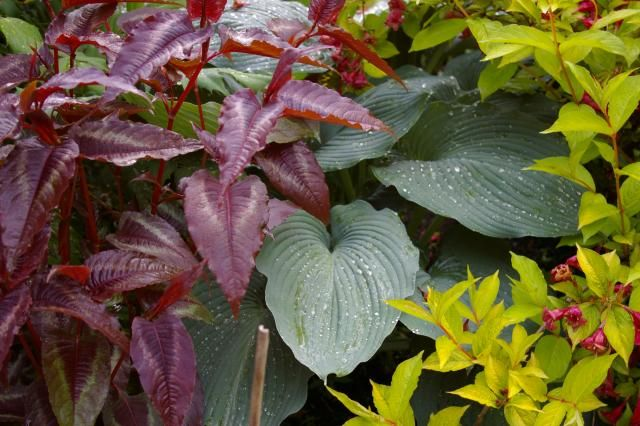 Fun hardscape and plants in Jeanne's garden in Washington | Fine Gardening