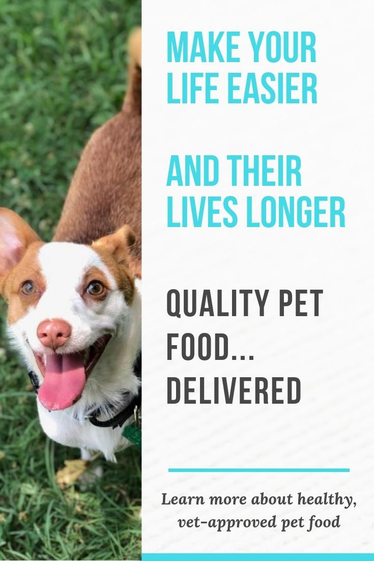 People who love their pets feed them the best. Sponsored