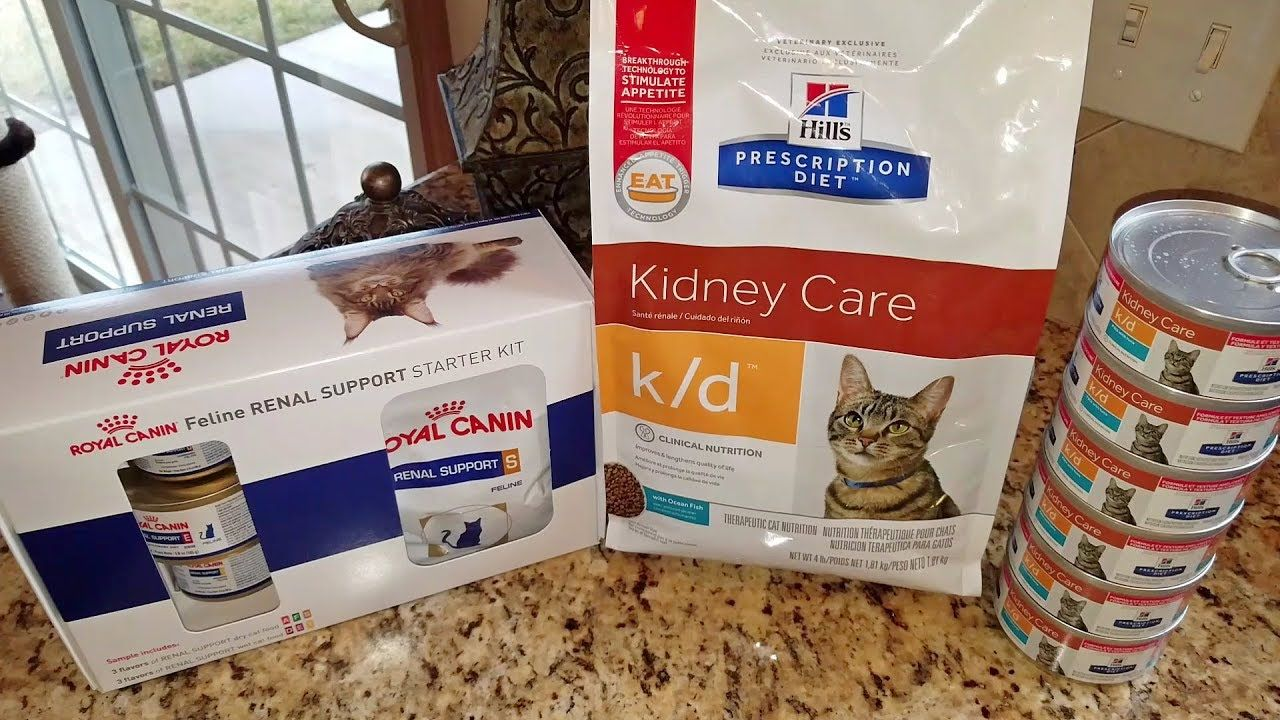 Cat Food Review Hill S Prescription Diet K D Kidney Care Vs Royal Can Low Protein Diet Cat Food Reviews Renal