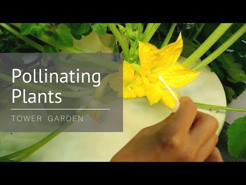 Youtube Tower Garden Pollination Shade Garden Plants