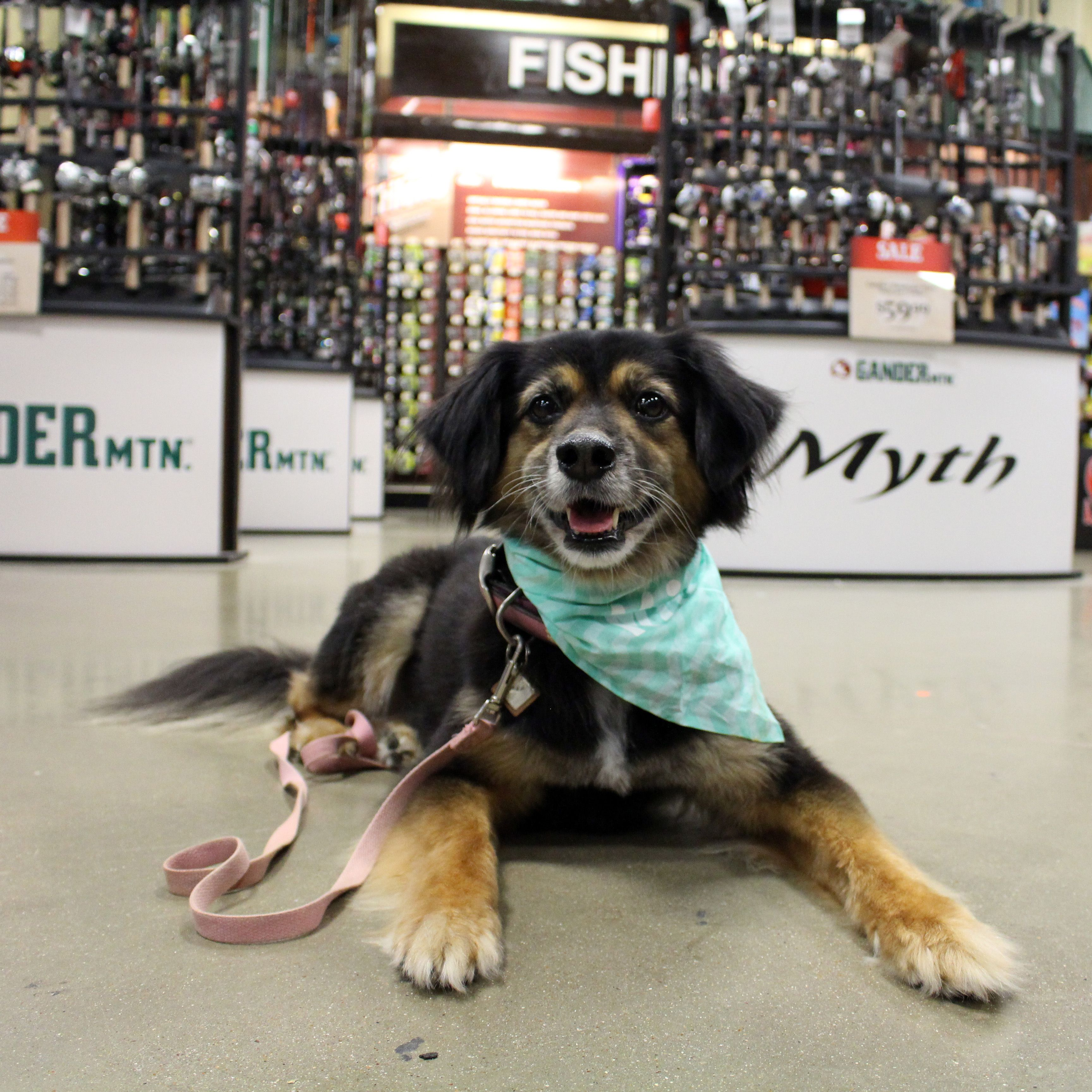 34 Stores That Don T Ask You To Leave Your Dog Outside While You Shop Dog Friendly Stores Stores That Allow Dogs Dog Shop
