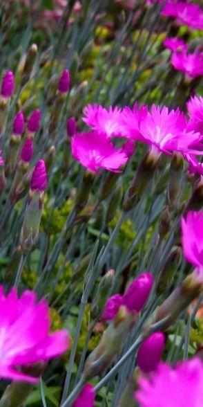 # Flores