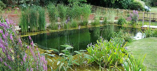 pond design dorset, natural swimming pools, floating fountains ...
