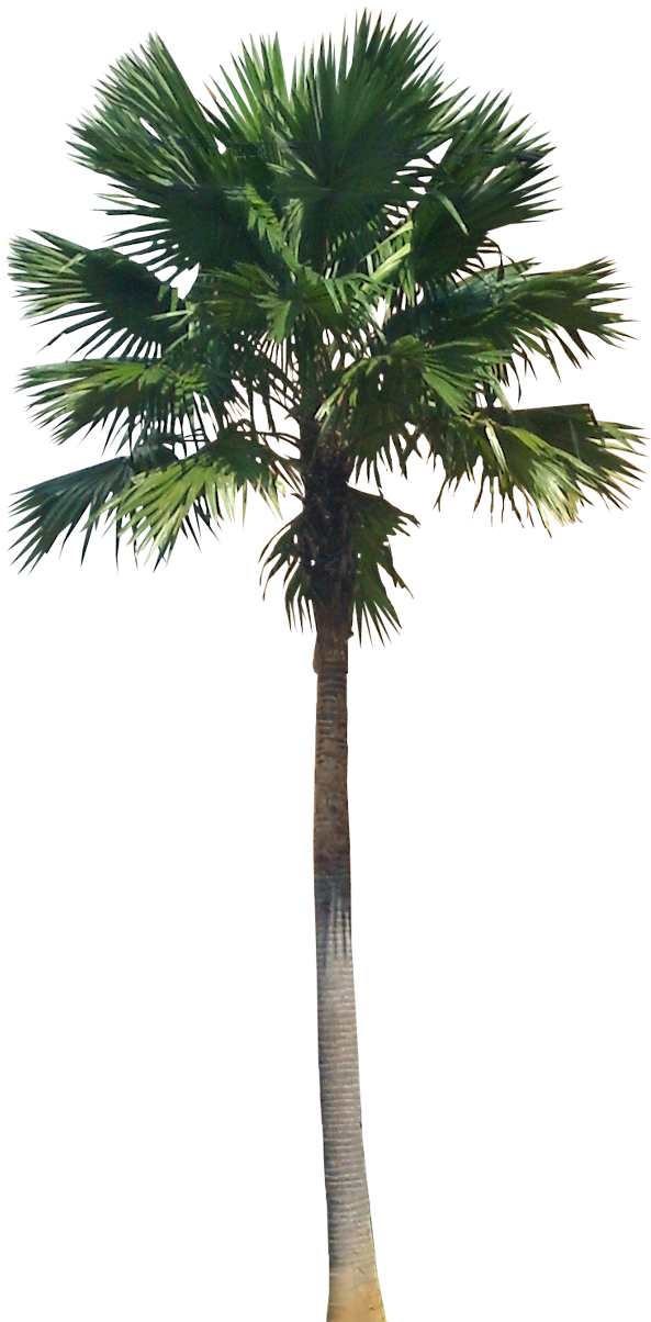 A Collection Of Tropical And Subtropical Plant Images With Transparent Background Palm Tree Png Tropical Plants Trees To Plant