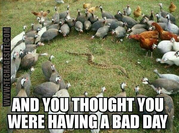 Funny Memes For A Bad Day : Bad day meme bird snake memes meme and memes