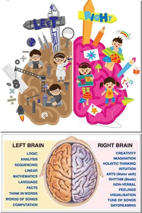 Brain Anatomy Left Right Hemisphere Ucmas Mental Training For