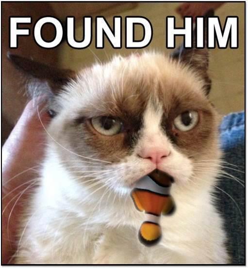 Grumpy Cat Pictures With Captions | Grumpy Cat, Tard ...