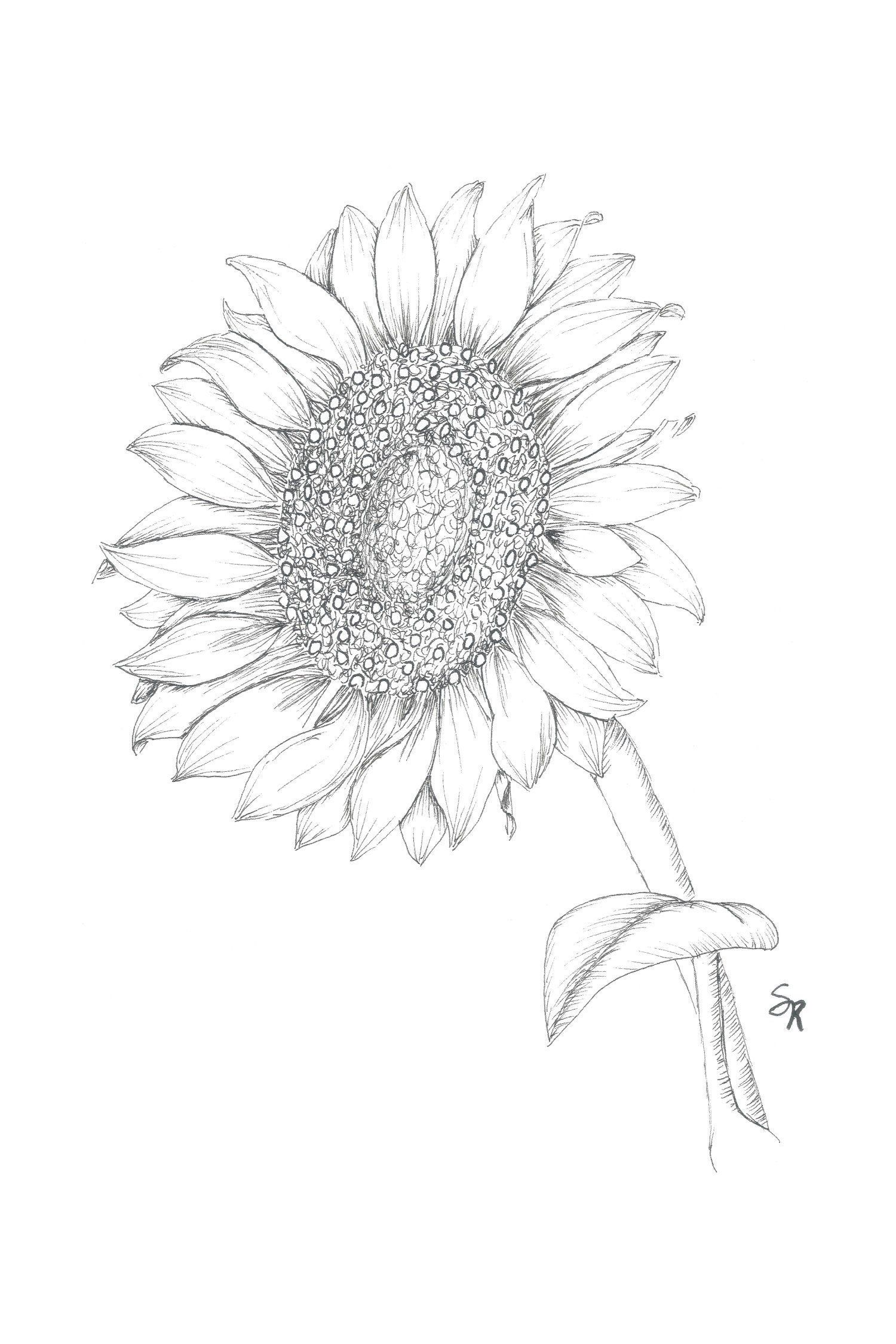 Sunflower, floral ink drawing, black and white drawing