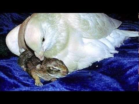 ▶ NOAH - The White Rescue Dove - YouTube