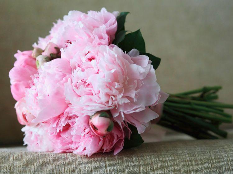 langage des fleurs que signifient leurs couleurs langage des fleurs les fleurs et. Black Bedroom Furniture Sets. Home Design Ideas