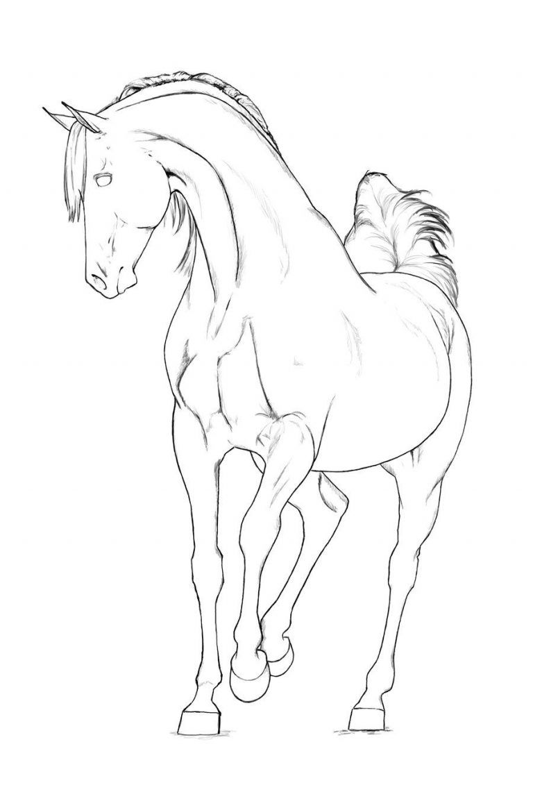 Arabian Horse Coloring Pages Related Keywords Amp Suggestions Inside Arabian Mare Coloring Pages P Horse Coloring Pages Horse Coloring Horse Coloring Books [ 1131 x 768 Pixel ]