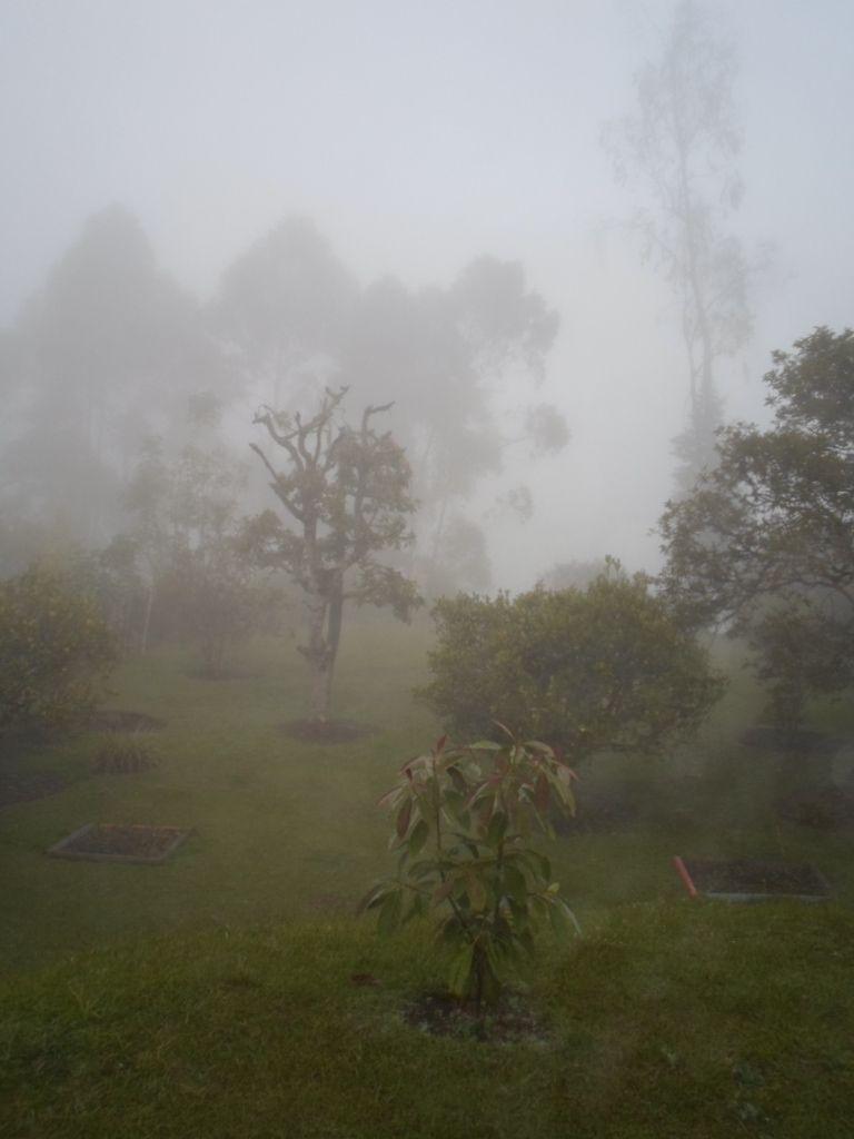 Los árboles y su fantasmagoría 4.