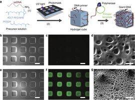 La fabricación de cubos de hidrogel con modificación pegamento ADN gigante uniforme.