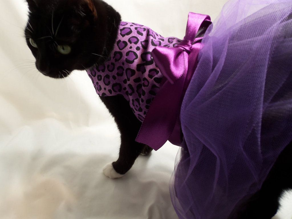Pets Don Their Finest Duds Cat dresses, Pet clothes
