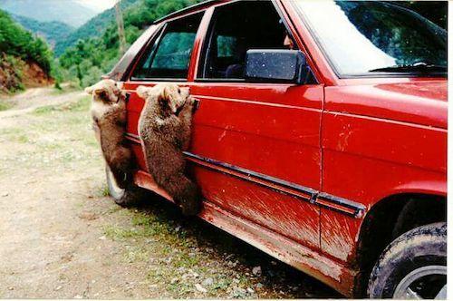 Musti08 Animals Dogs Car